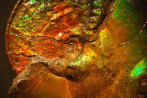 Fossiele ammoniet